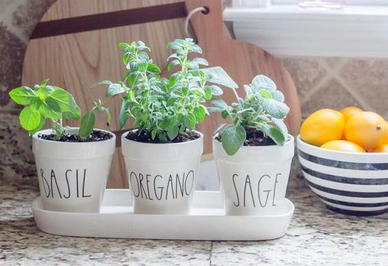 herb garden inspiration